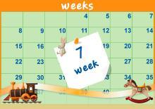 7η Εβδομάδα