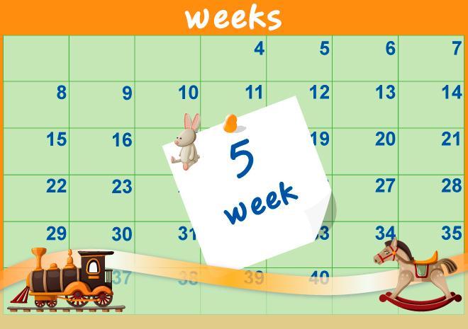 5η Εβδομάδα